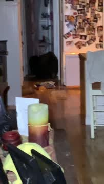 Bear In California Home Helps Himself To Food