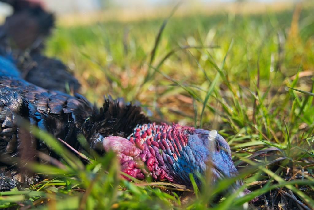 Turkey Hunting