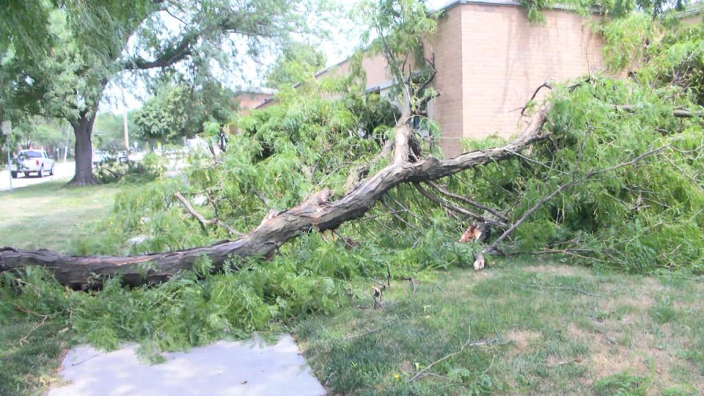 tree limb falls near centerpointe