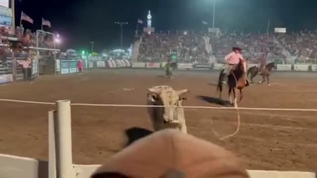 Caught On Tape: Bull Charges Crowd At Idaho Rodeo