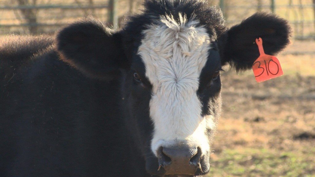 Jasper County Sheriff's Office Taking Steps to Prevent Cattle Theft