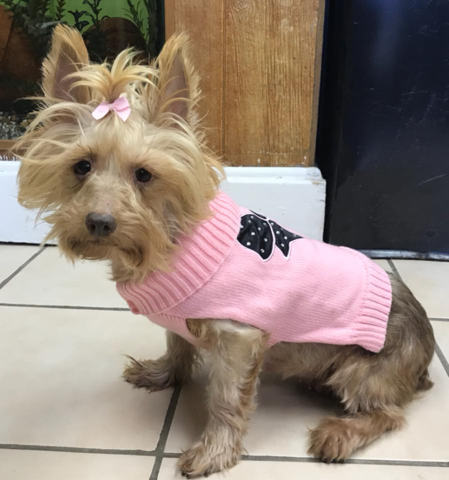 Pet Connection: Trudy & Prince (1-31-18)