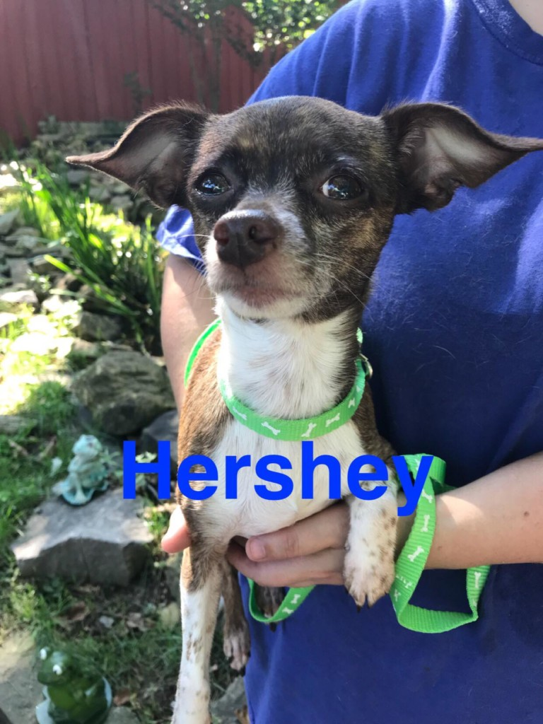 Pet Connection: Hershey & Tyler (9-12-18)