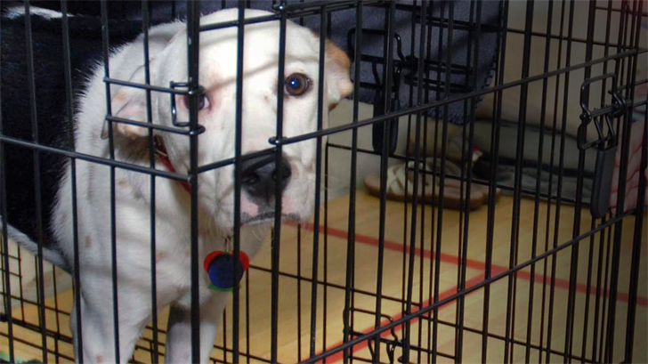 Missouri Humane Society To Help Rescue Animals Caught In Hurricane Florence