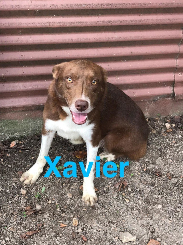 Pet Connection: Xavier & Buddy