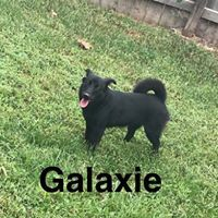 Pet Connection: Galaxie & Lilly