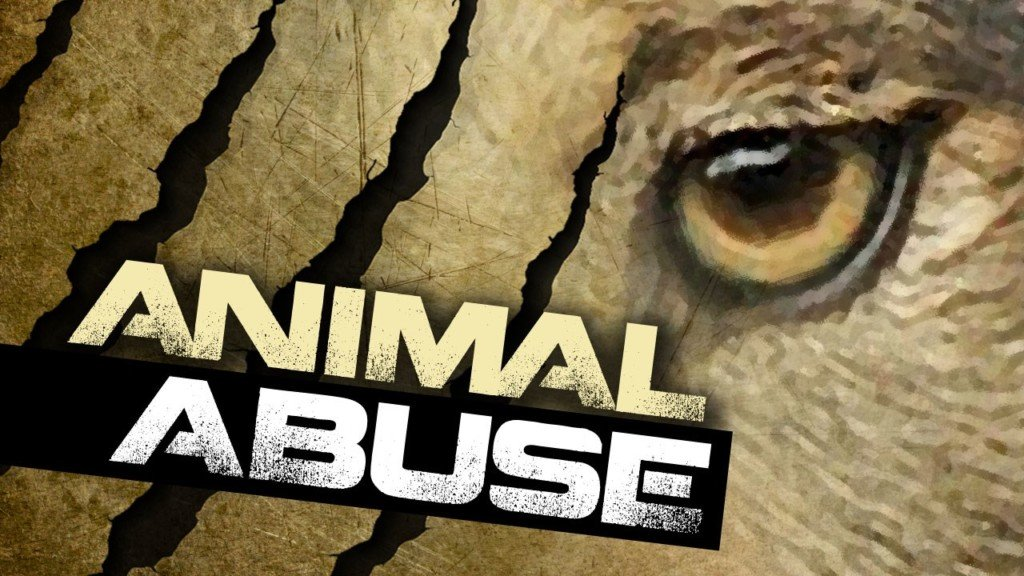 Man accused in dog abuse case now facing federal charges