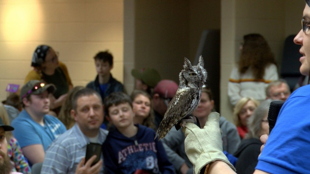 Birds of prey draw in large crowd