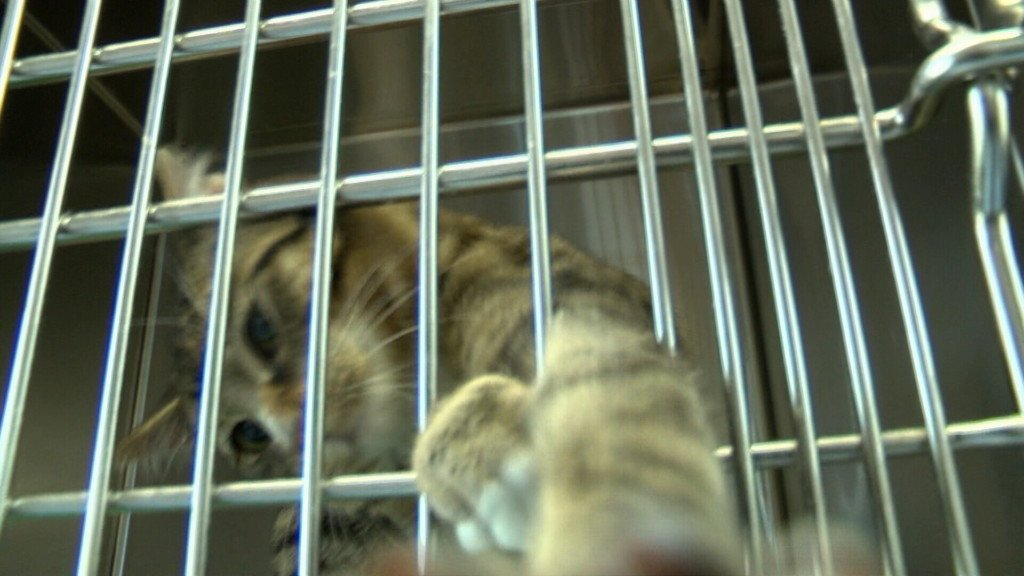 Carthage Humane Society to receive additional funding