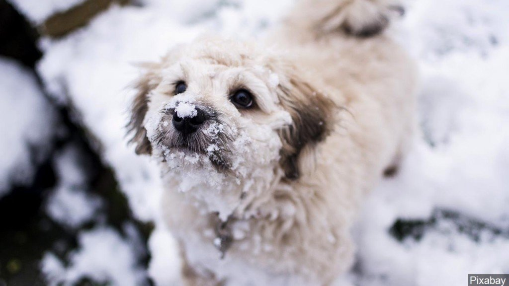 Humane Society: Keep pets safe in freezing temperatures