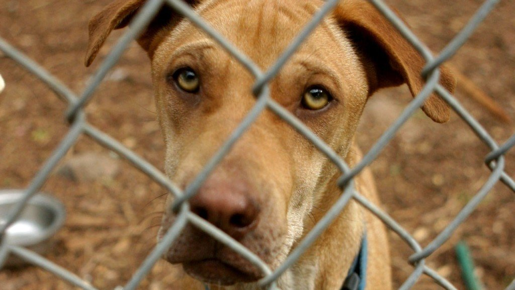 Missouri bill would require evaluations in some animal abuse cases