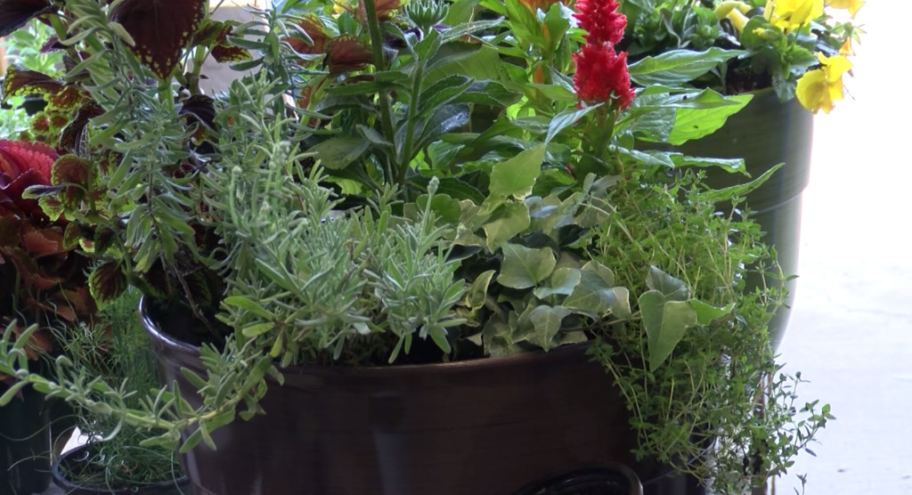 Joplin Greenhouse and Garden Center holds container planting class