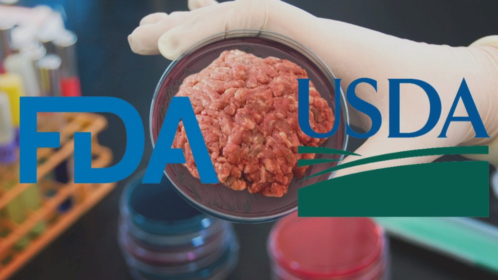 USDA and FDA join to regulate cell-cultured food from cells of livestock, poultry