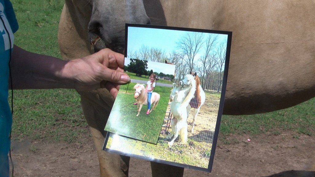 Dog attack leads to Joplin pony's death, community mourns loss