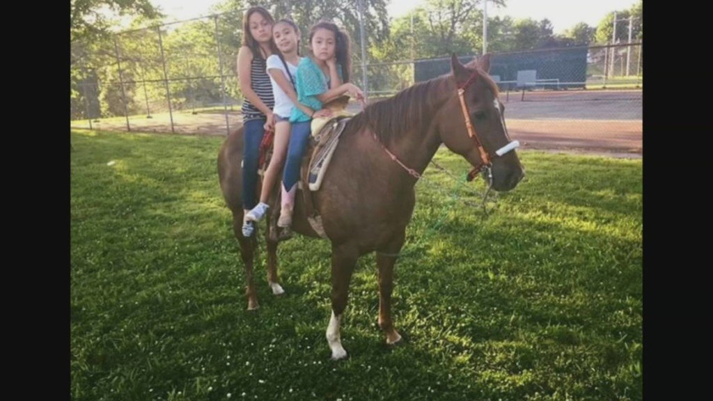 Horse found dismembered in Kansas City was a family pet