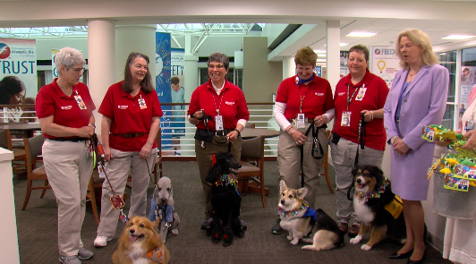 Therapy dogs at Freeman hospital for National Therapy Animal Day
