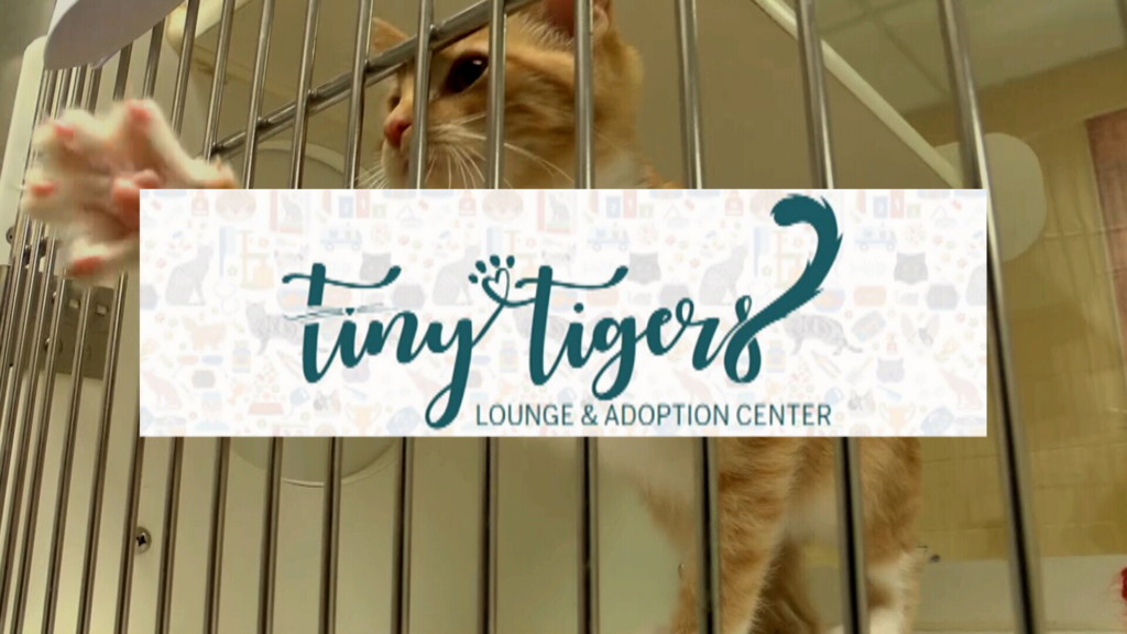 Cat lovers: a temporary cat lounge pops-up in Joplin