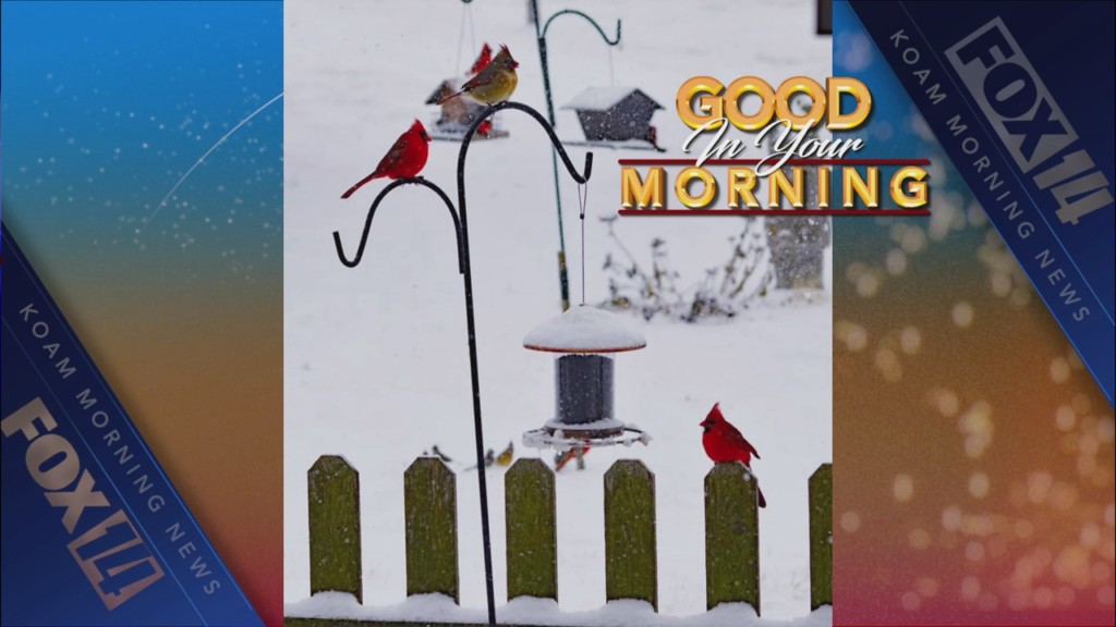Good in your morning birdfeeders