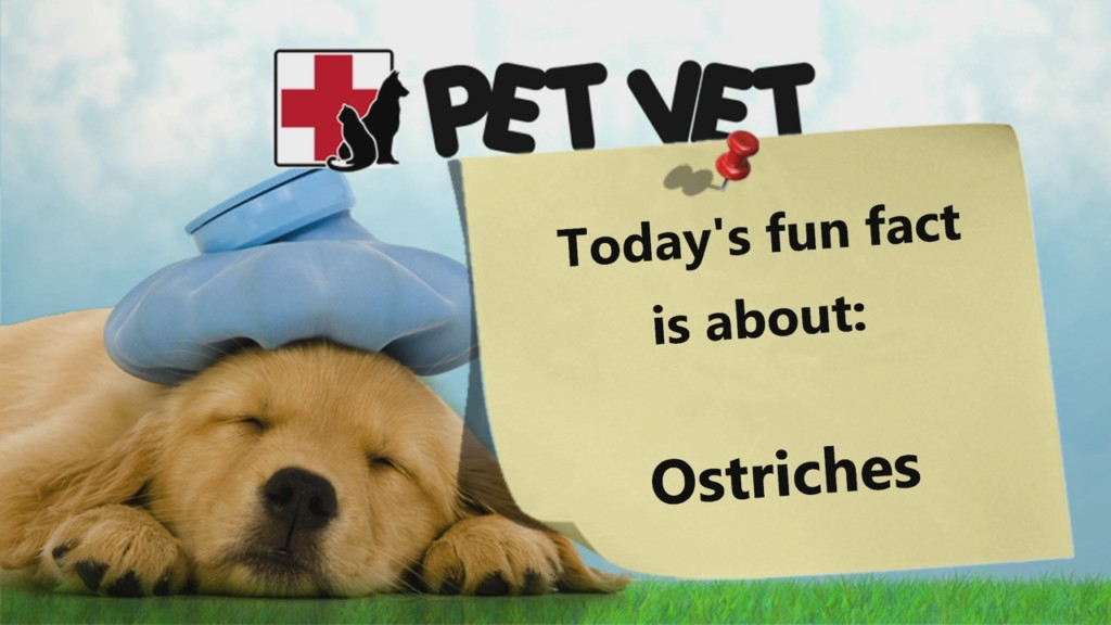 pet vet graphic