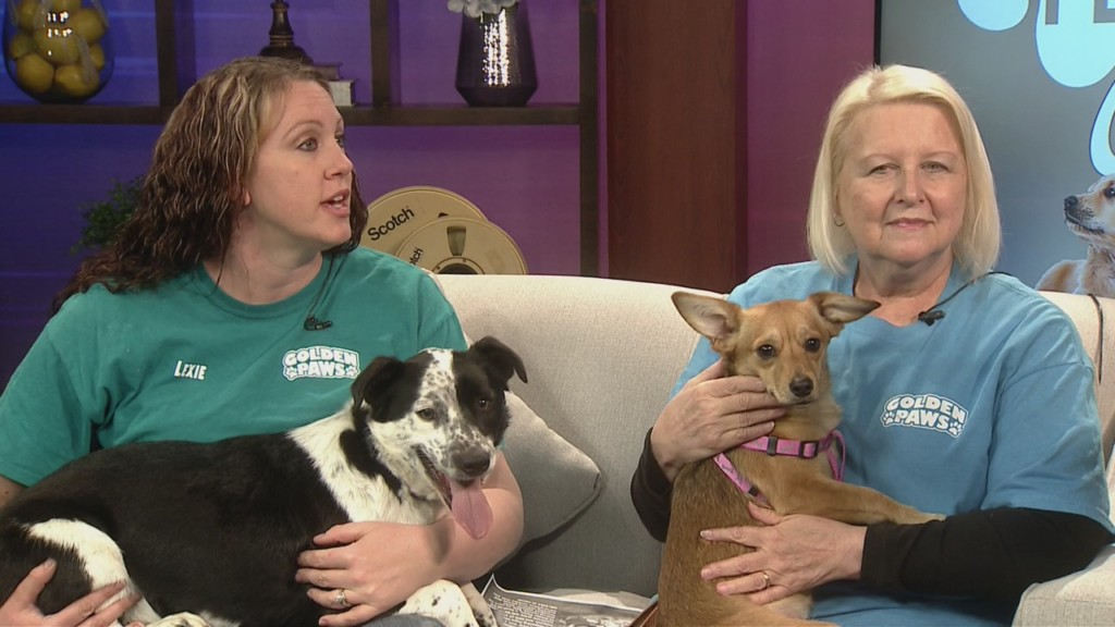 Pet Connection (1-29-2020)