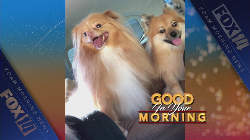 good in your morning graphic with dogs