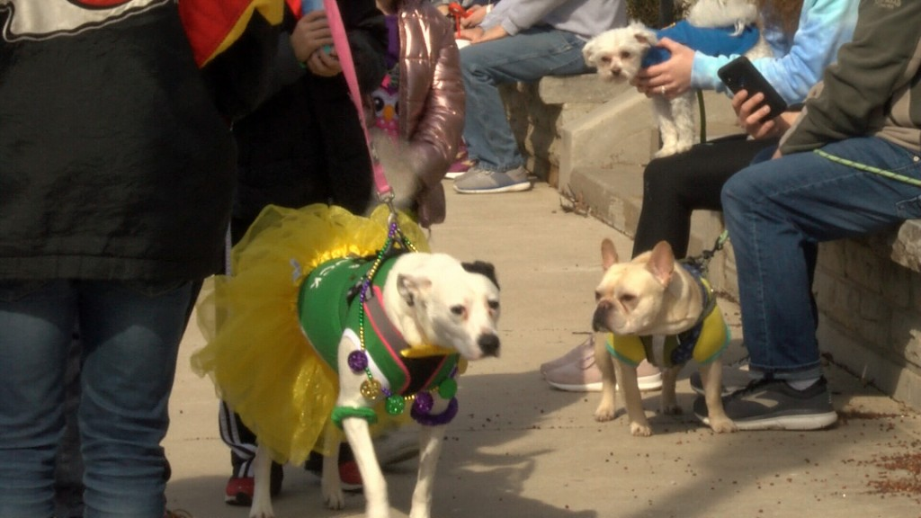 dogs party in Carthage for Doggie Gras