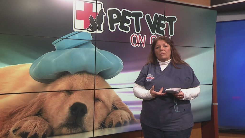 Pet Vet On Call (3/4/20)