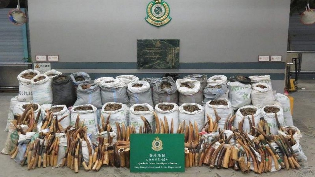 Hong Kong authorities bust record $8M worth of ivory tusks, pangolin scales