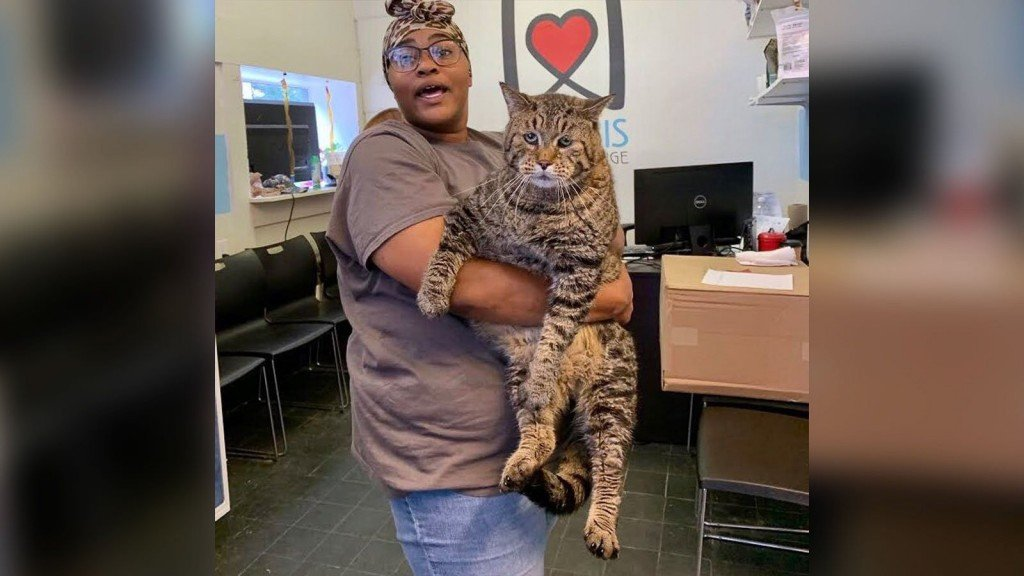 26-pound shelter cat that enchanted internet finds home