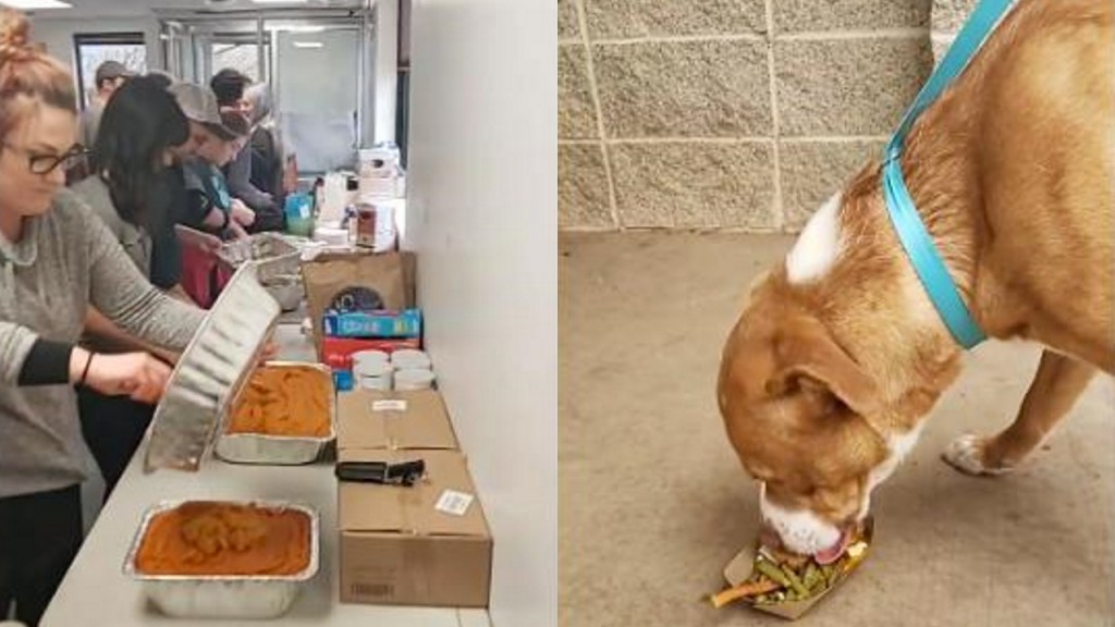 Texas shelter animals get Thanksgiving meals