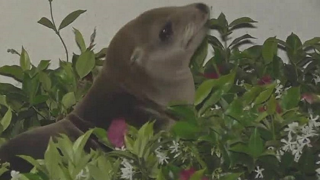Sea lion lies down in front of hotel, refuses to budge