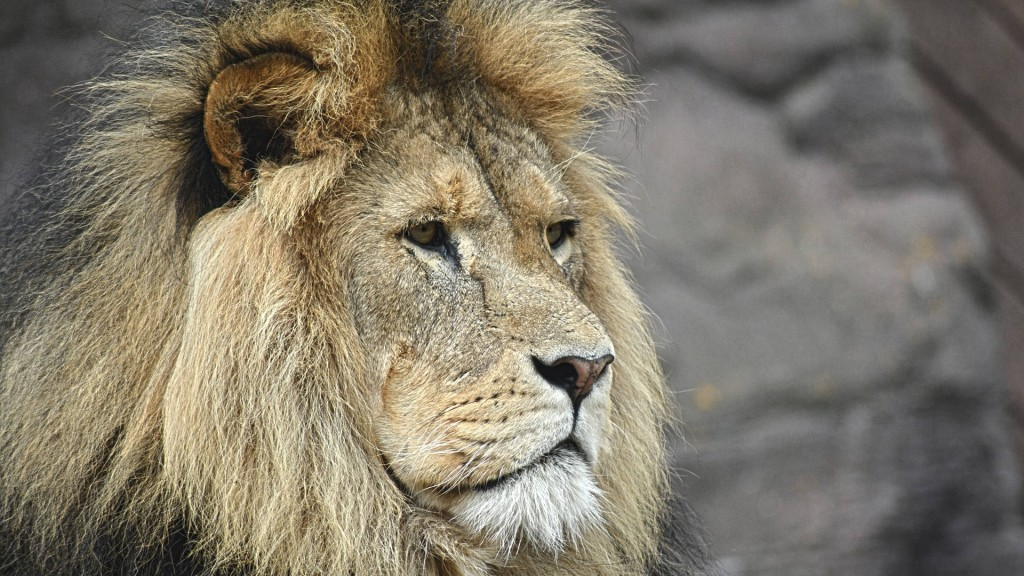 Trump administration approved importation of lion trophy, documents show