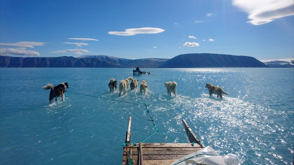 Photo of sled dogs shows reality of Greenland's melting ice sheet