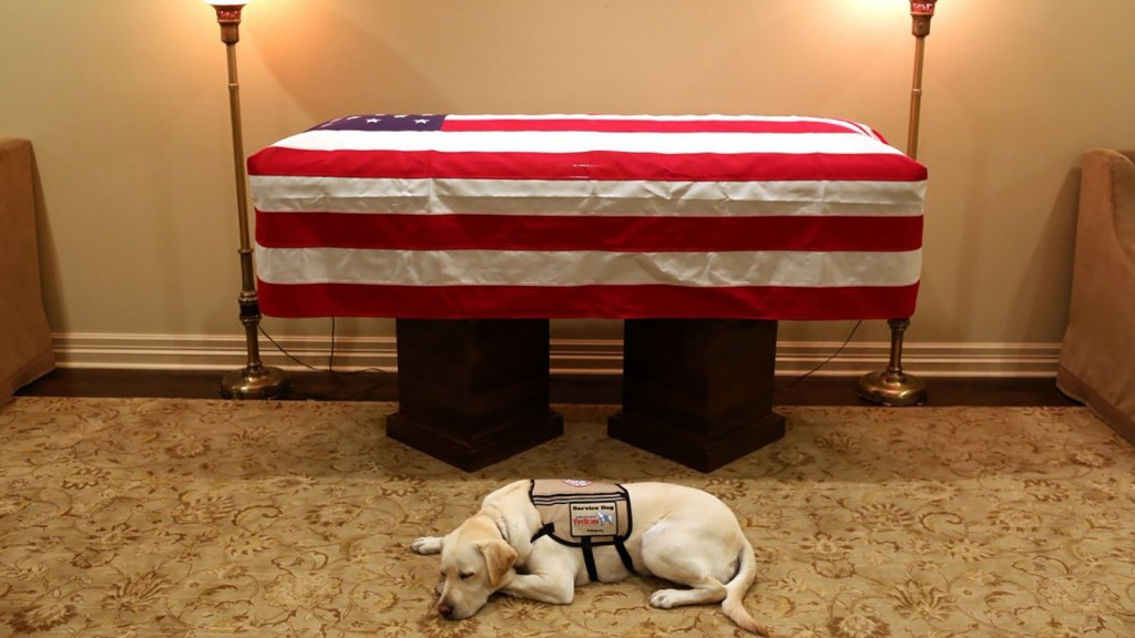 Statue of George H.W. Bush's service dog will sit in presidential library