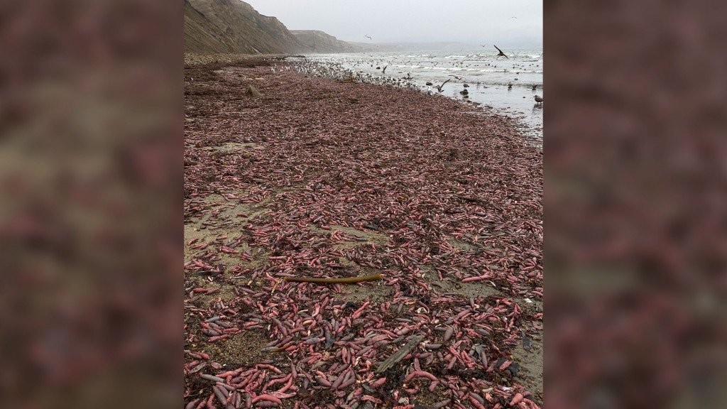 Thousands of chunky, squirming worms wash up on California beach