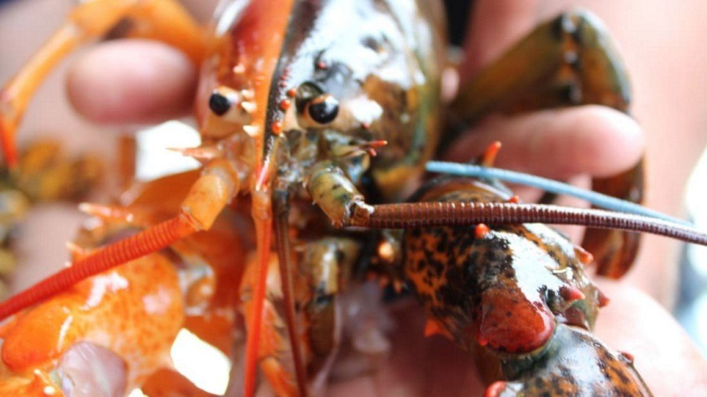 Super rare two-toned lobster turns up in Maine