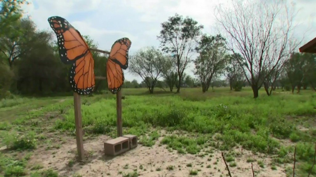 Butterfly conservationists ask court to stop border wall construction