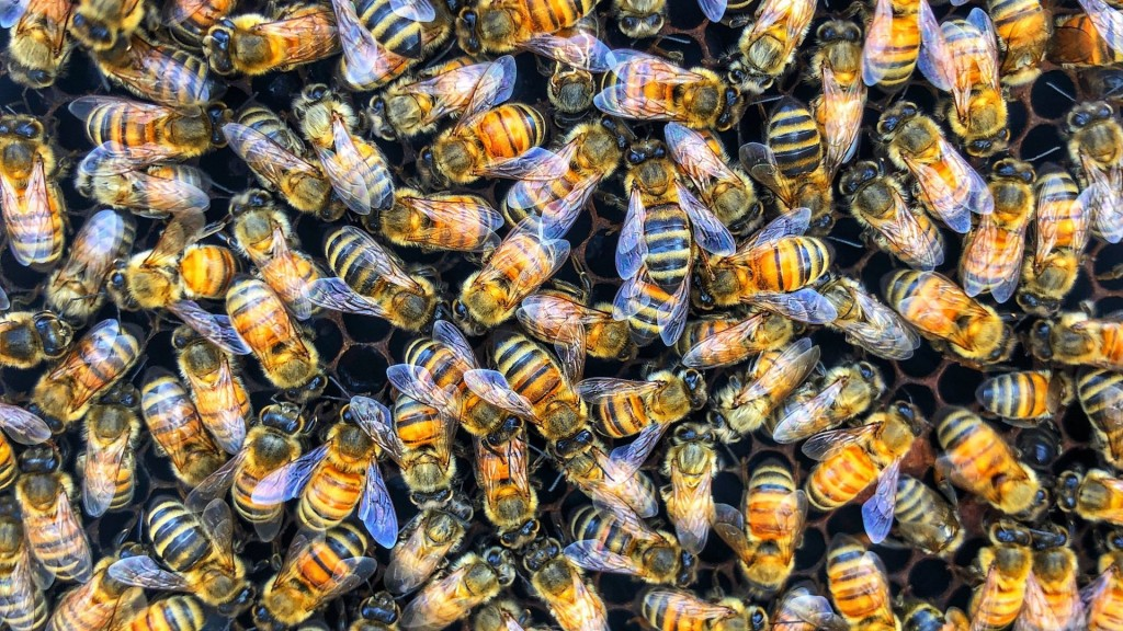 Startup saving crops by making 'super bees'