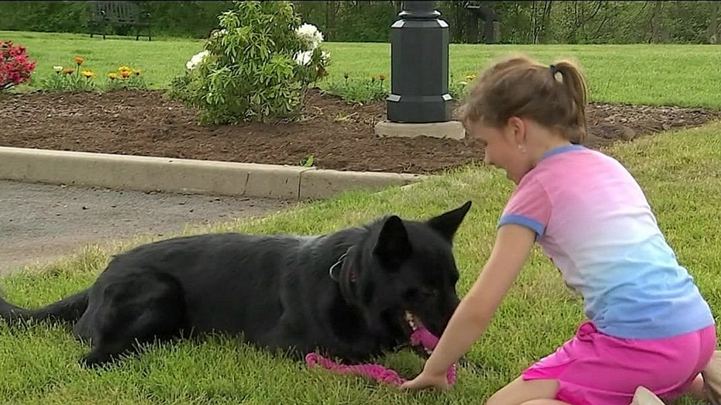 Girl creates toy for police dogs