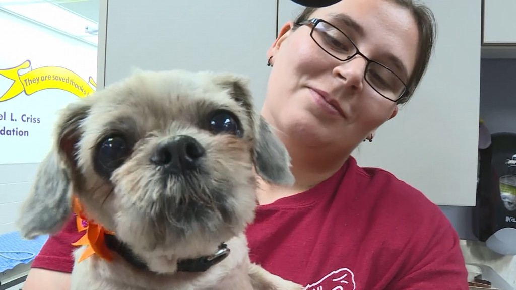 Neglected dog gets new life