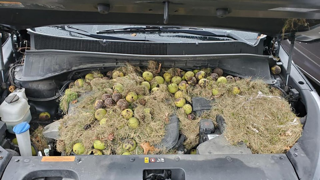 Pittsburgh car's surprise cargo is nuts