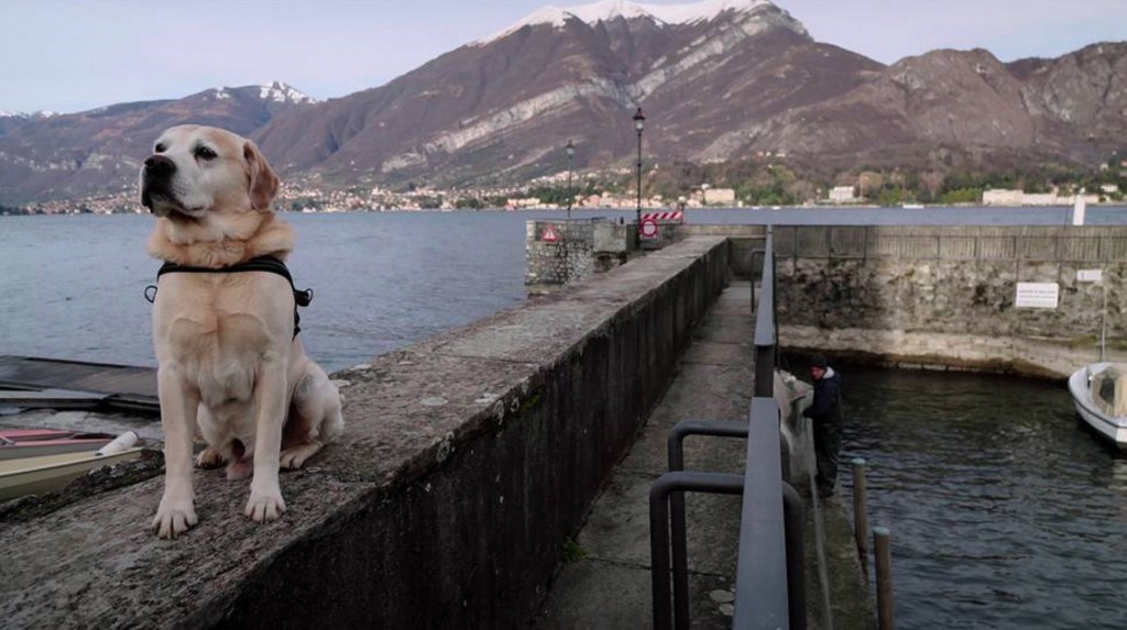 'Dogs' is a feel-good tale about BFFs with tails