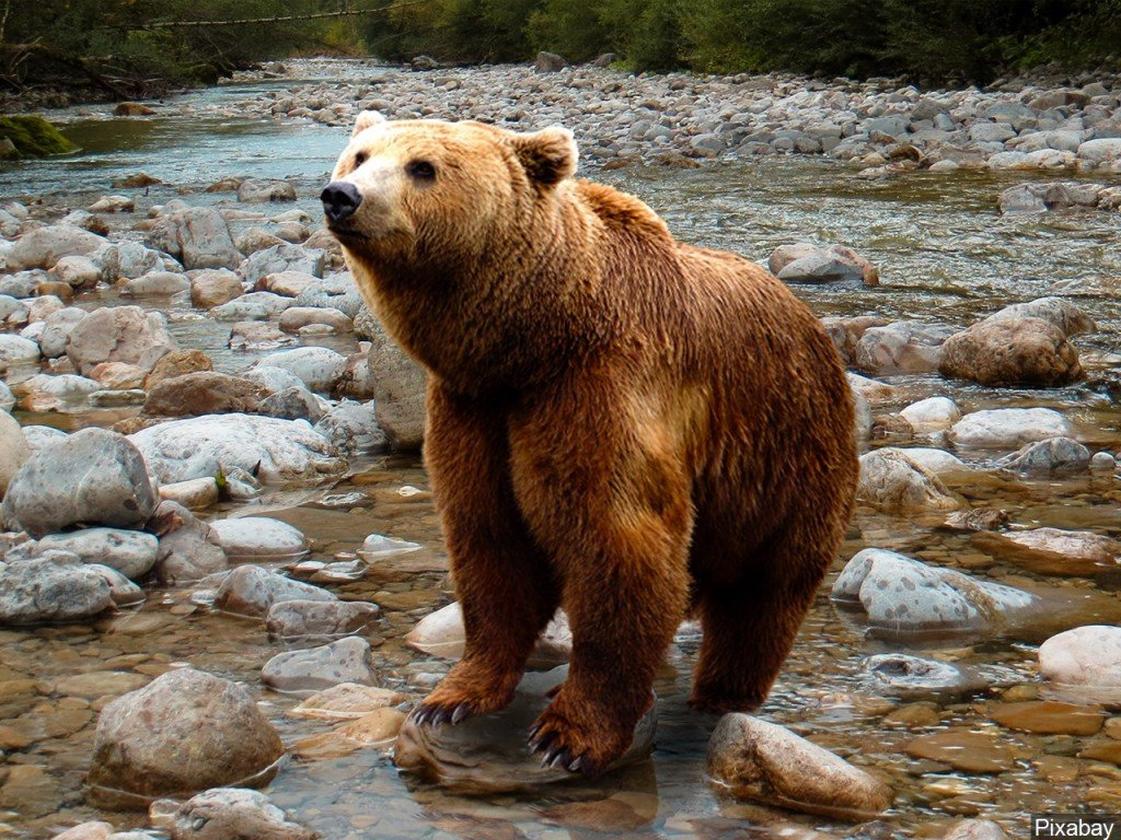 Brown bear seen for first time in 150 years in northern Spanish park