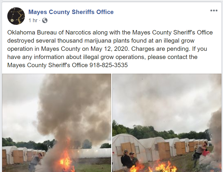 Mayes County Oklahoma Sheriff's Office Burns Plans In Grow Operation