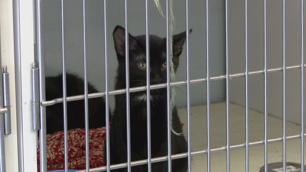 Carthage Humane Society In Need Of Donations
