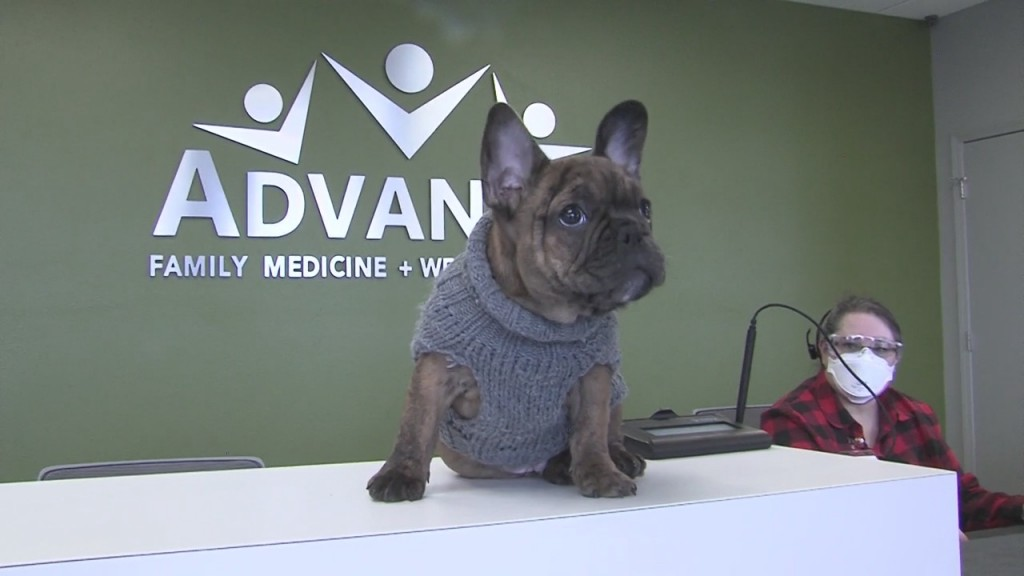 Walter Is A French Bulldog Currently Employed At Advanced Family Medicine And Wellness Center To Joplin
