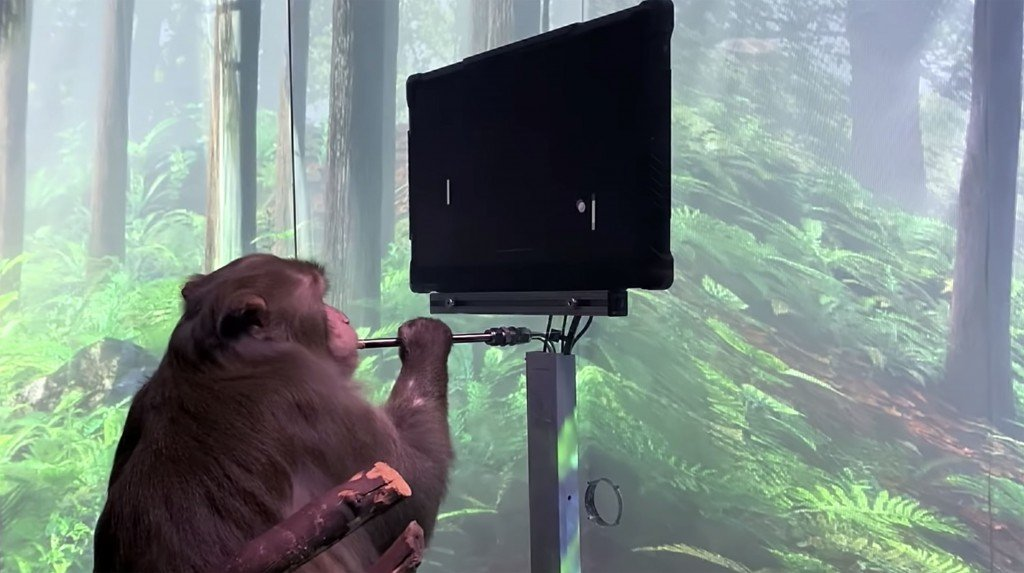 Neuralink The Implant Company Owned By Spacex And Tesla Ceo Elon Musk Has Released A Video In Which A Monkey Appears To Play The Computer Game Pong Using Only Its Mind