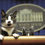 New Cat Set To Join Bidens' Dogs At The White House