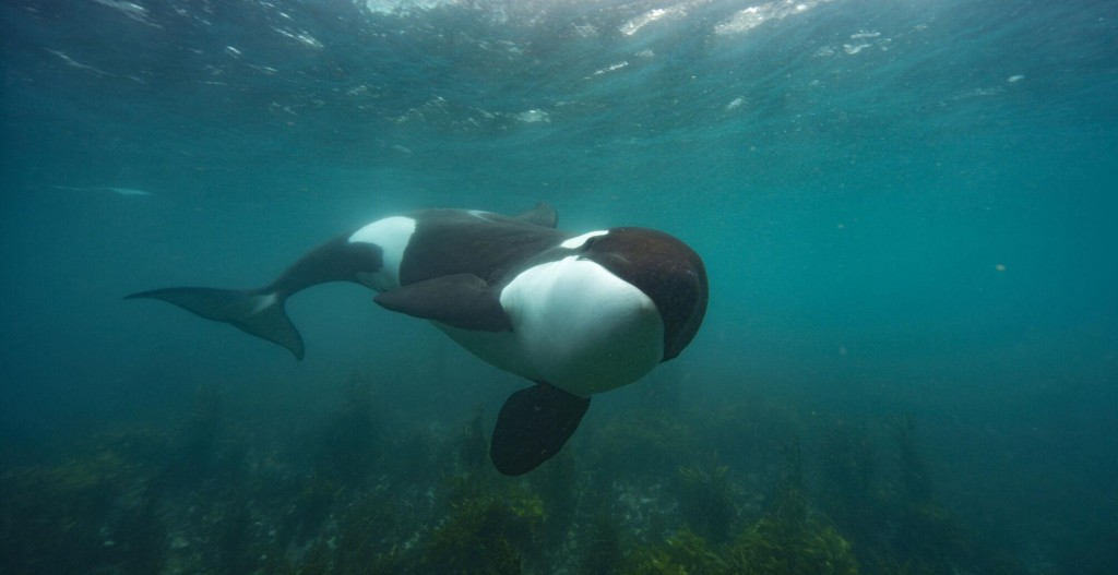 Natgeo's 'secrets Of The Whales' Surfaces Little Known Facts