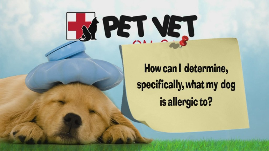 """Pet Vet Question: """"how Can I Determine, Specifically, What My Dog Is Allergic To?"""""""